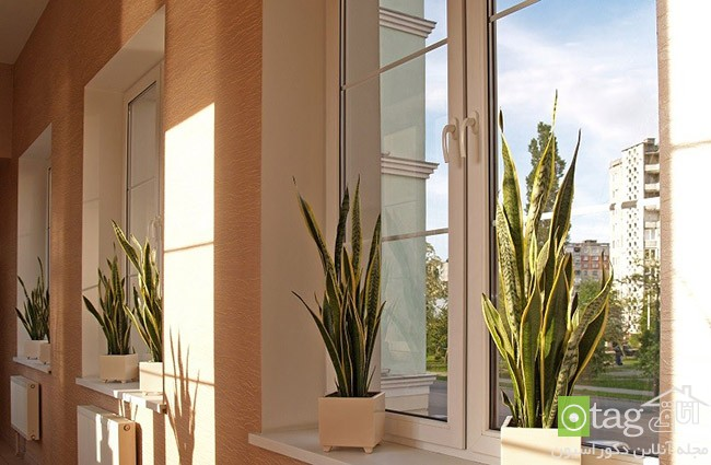 Air-puryfying-plants-for-your-interior (10)