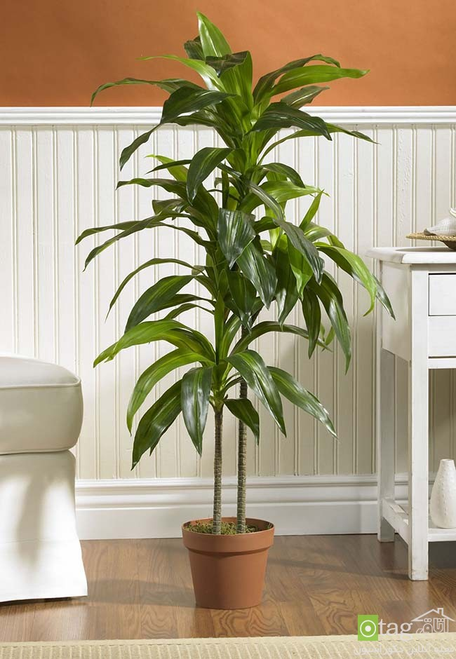 Air-puryfying-plants-for-your-interior (11)