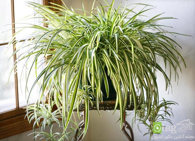 Air-puryfying-plants-for-your-interior (12)