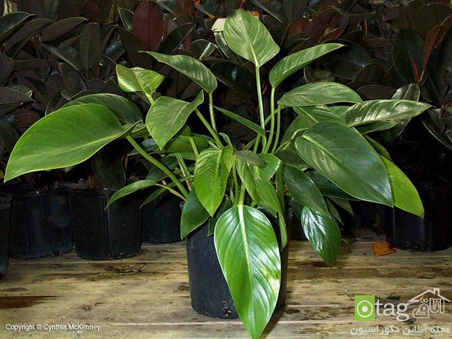 Air-puryfying-plants-for-your-interior (13)