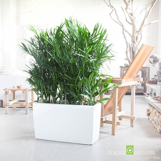 Air-puryfying-plants-for-your-interior (6)