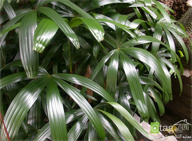 Air-puryfying-plants-for-your-interior (7)