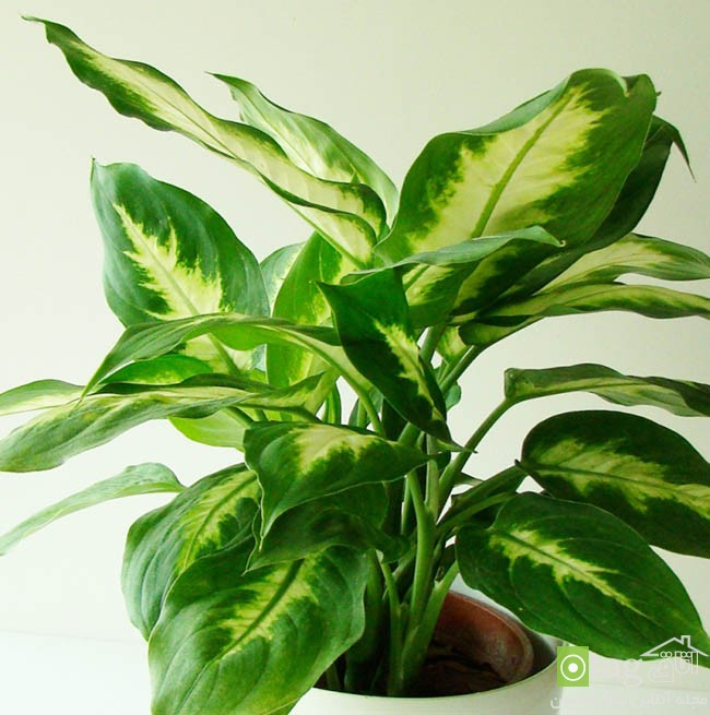 Air-puryfying-plants-for-your-interior (9)