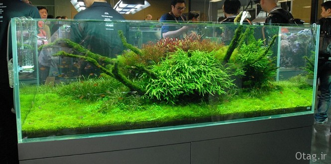 Nature-Aquarium-665x329