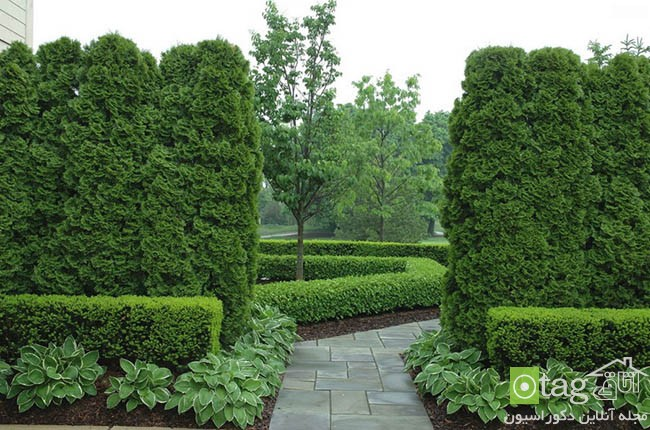 Privacy-hedge-created-by-plants (13)