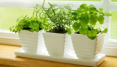 apartment-plants-for-interior-decorations (12)