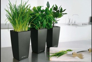 decorative-flower-pot-design-ideas (5)