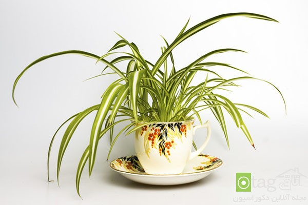 houseplants-with-less-care (3)