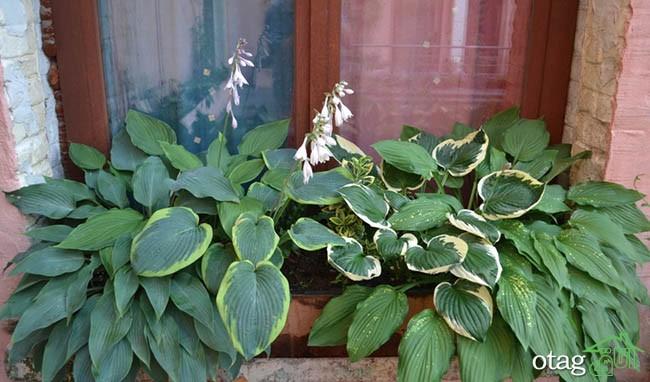 تزیین-بالکن-با-گیاهان (19)