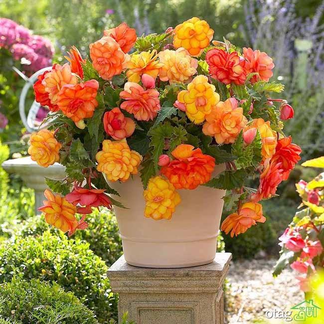تزیین-بالکن-با-گیاهان (2)