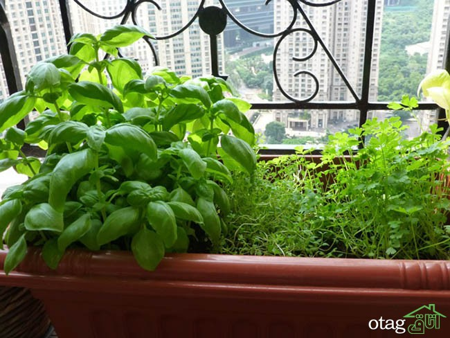 تزیین-بالکن-با-گیاهان (23)