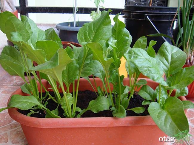 تزیین-بالکن-با-گیاهان (27)