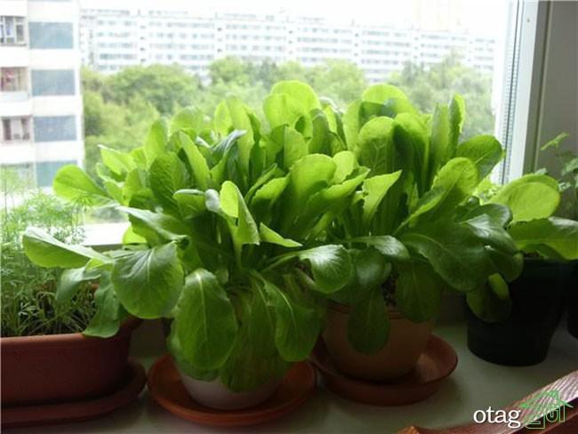 تزیین-بالکن-با-گیاهان (29)