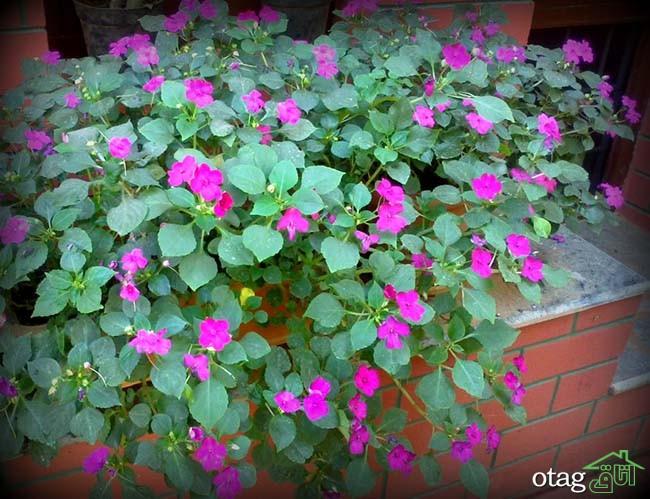 تزیین-بالکن-با-گیاهان (3)