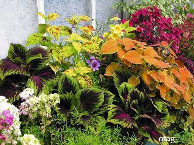 تزیین-بالکن-با-گیاهان (30)