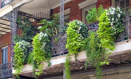 راهنمایی مفید و جامع برای تزیین بالکن با گیاهان شاداب و زیبا