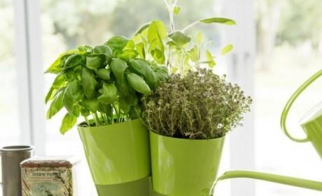 گلدان تزیینی مدرن برای گیاهان دارویی و خوشبو در داخل منزل