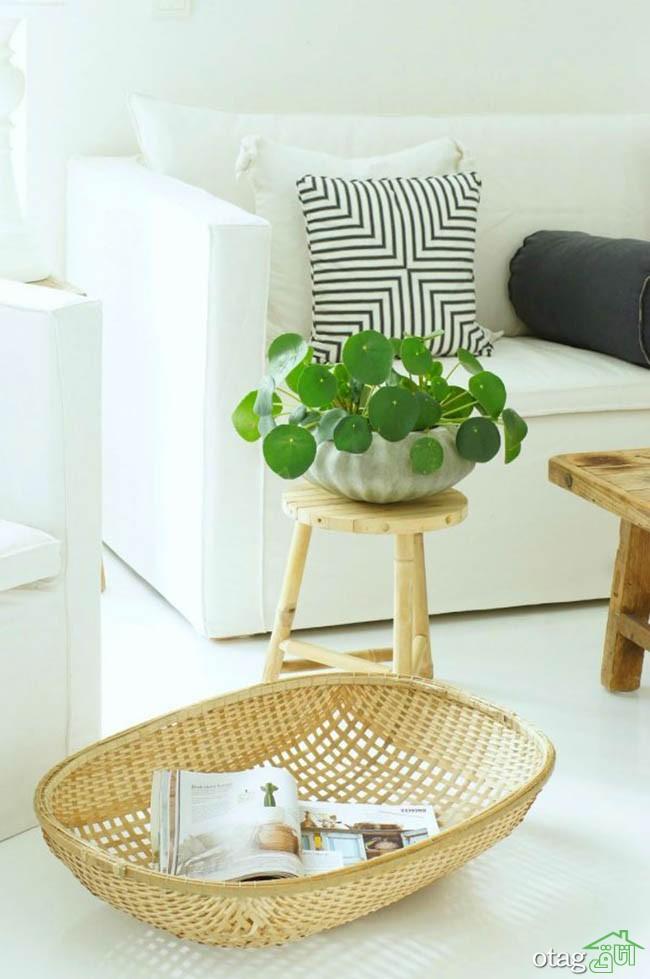 گیاهان-آپارتمانی-مقاوم (1)