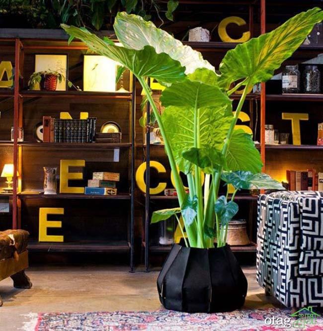 گیاهان-آپارتمانی-مقاوم (10)