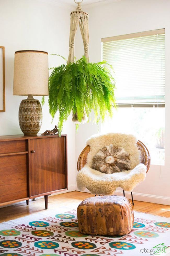 گیاهان-آپارتمانی-مقاوم (12)