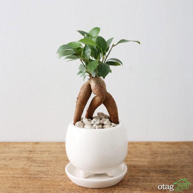 گیاهان-آپارتمانی-مقاوم (14)