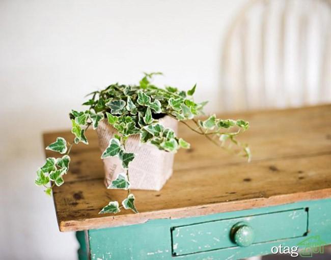 گیاهان-آپارتمانی-مقاوم (15)