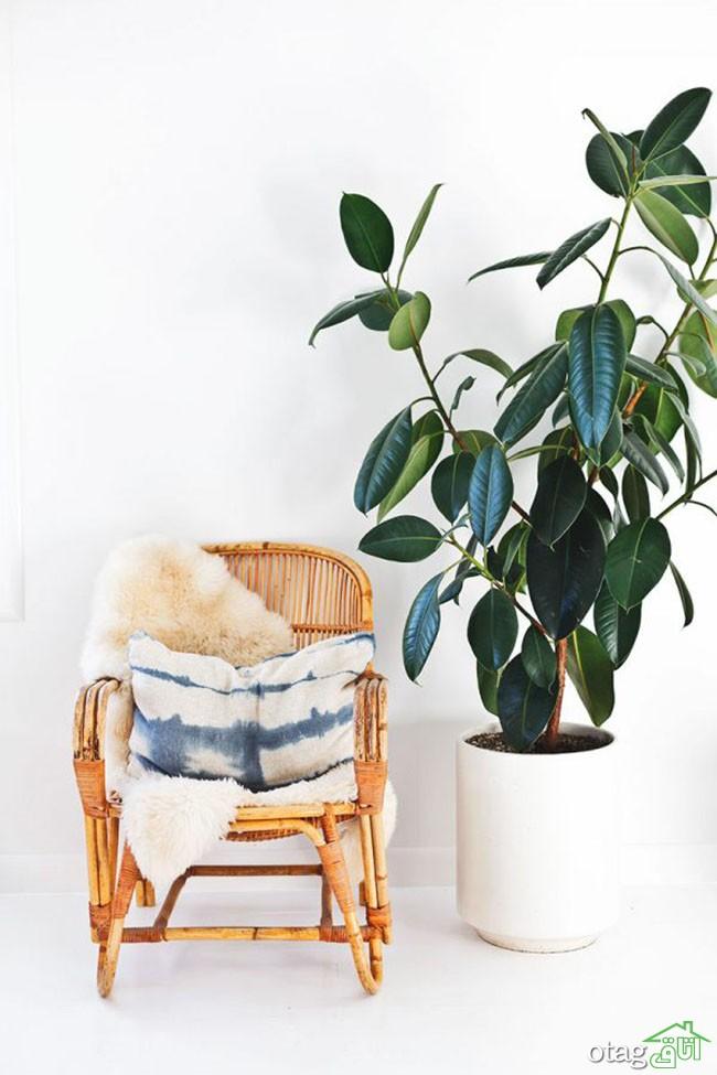 گیاهان-آپارتمانی-مقاوم (16)