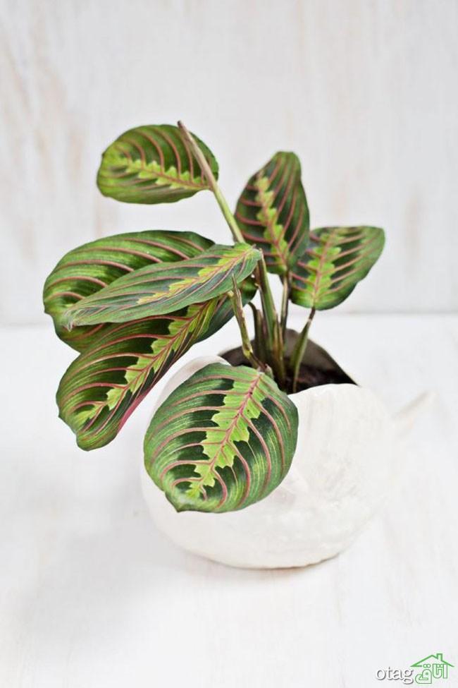 گیاهان-آپارتمانی-مقاوم (17)