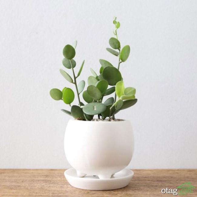 گیاهان-آپارتمانی-مقاوم (2)