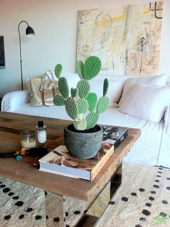 گیاهان-آپارتمانی-مقاوم (22)