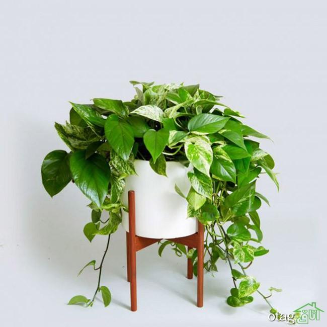 گیاهان-آپارتمانی-مقاوم (23)