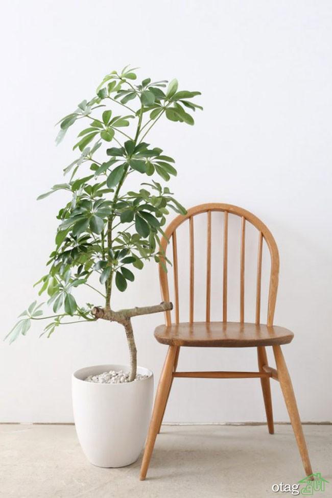 گیاهان-آپارتمانی-مقاوم (24)