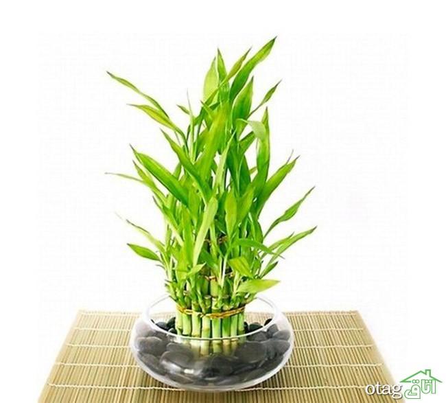 گیاهان-آپارتمانی-مقاوم (27)