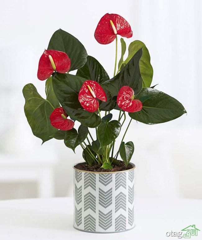 گیاهان-آپارتمانی-مقاوم (28)