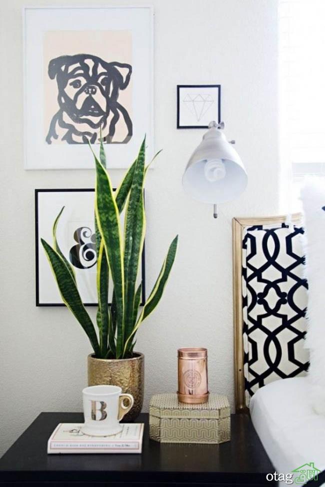گیاهان-آپارتمانی-مقاوم (29)