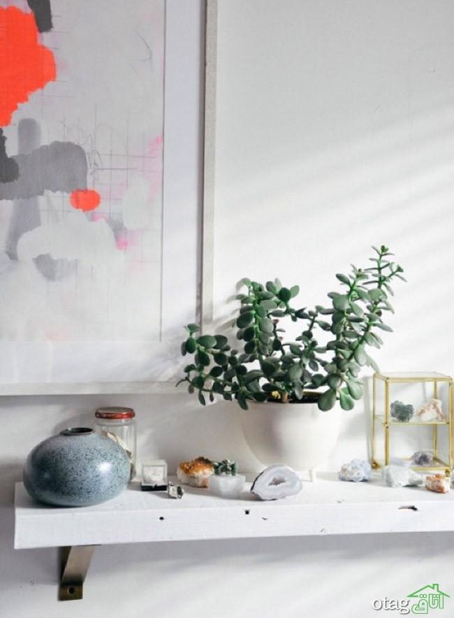 گیاهان-آپارتمانی-مقاوم (3)