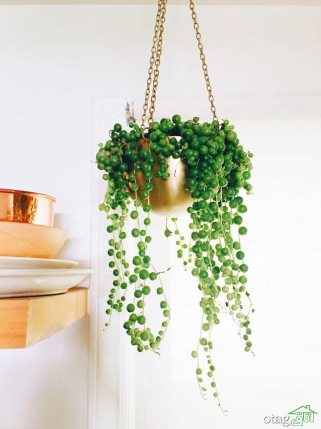 گیاهان-آپارتمانی-مقاوم (30)
