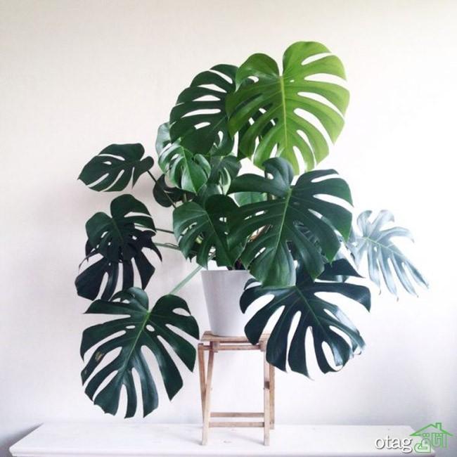 گیاهان-آپارتمانی-مقاوم (32)