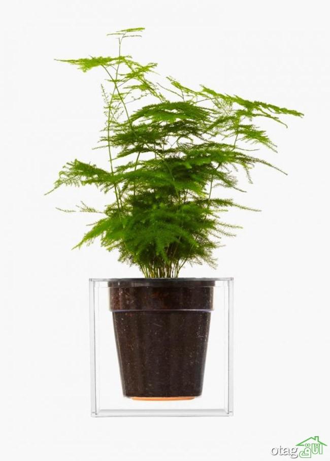 گیاهان-آپارتمانی-مقاوم (33)