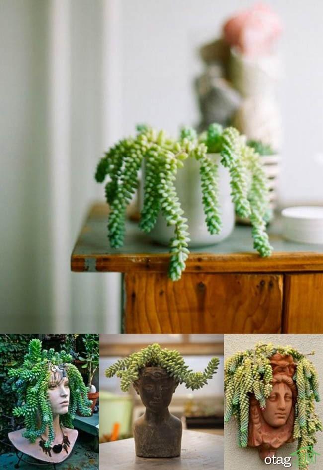 گیاهان-آپارتمانی-مقاوم (34)