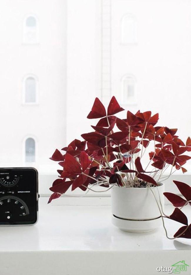 گیاهان-آپارتمانی-مقاوم (4)