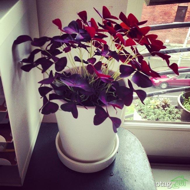 گیاهان-آپارتمانی-مقاوم (5)