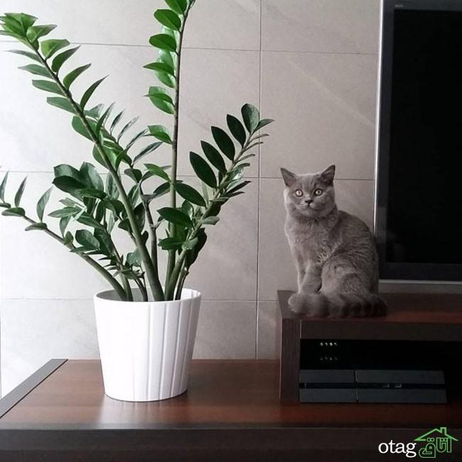 گیاهان-آپارتمانی-مقاوم (7)