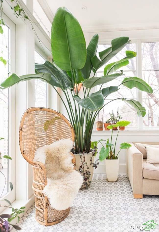 گیاهان-آپارتمانی-مقاوم (9)