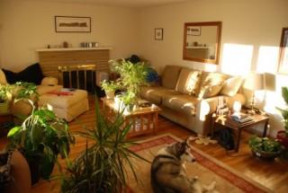 تاثیر استفاده از گل و گیاه آپارتمانی طبیعی در دکوراسیون منزل