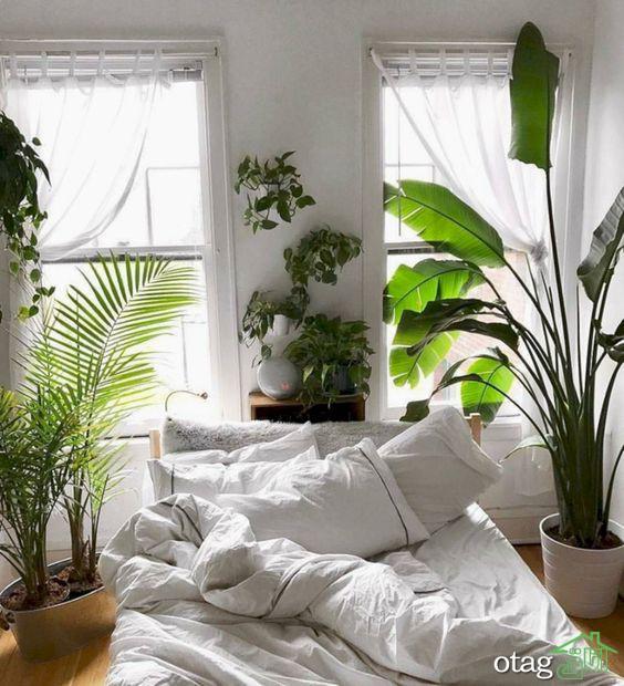 تزیین خانه با گلدان و گیاهان شیک و سرسبز مناسب تمامی اتاق ها