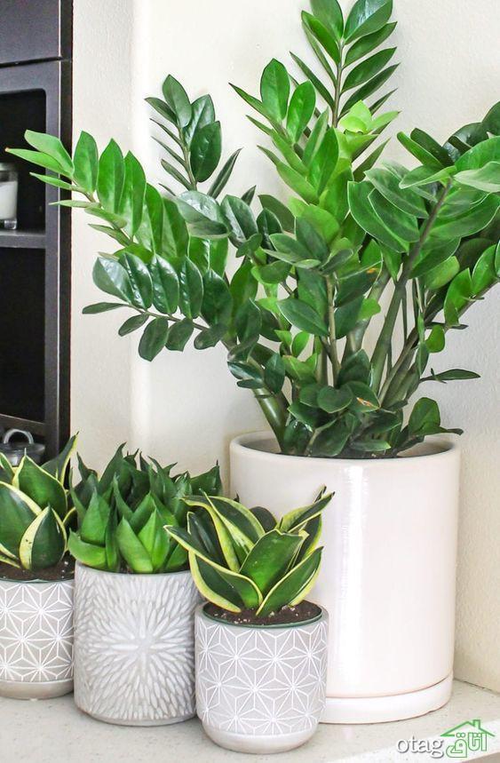 آموزش نگهداری از گیاهان آپارتمانی [ 3 روش کاربردی]
