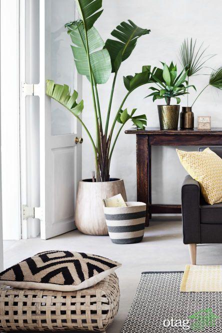 آشنایی با 6 نمونه از گیاهان مقاوم به گرما