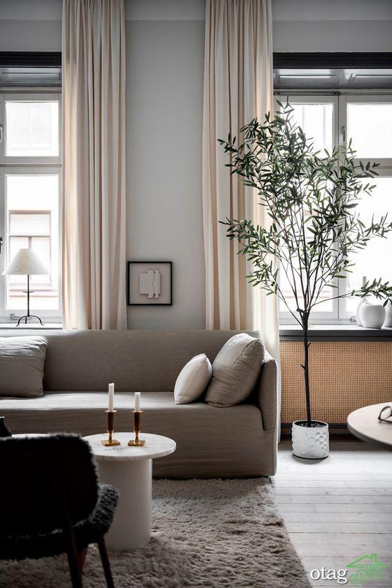 معرفی و بررسی تاثیرات استفاده از درختچه های آپارتمانی