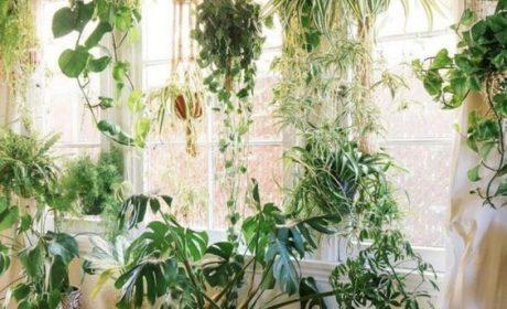 معرفی انواعی از گیاه خانگی که سایه را دوست دارد